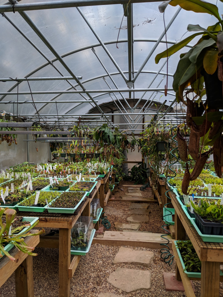 Carnivorous plants in Texas – Herself\'s Plants